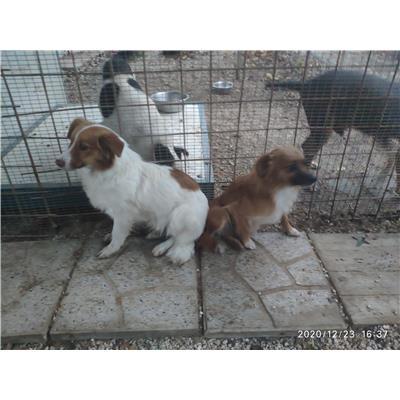 Montecorvino Rovella - 380260043977488
