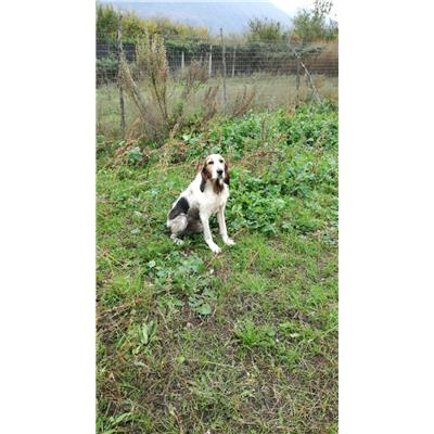 STAIANO - Cane - Microchip 380260004052458