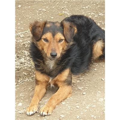 STAIANO - Cane - Microchip 380260042974143